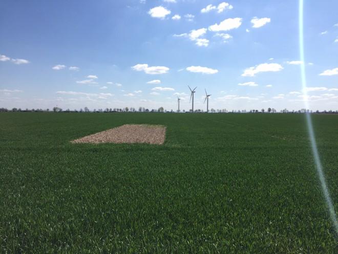 Windräder in der Sonne