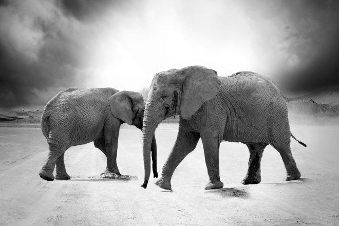 Elefantenrunde nach der Wahl