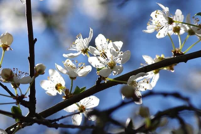 Frühling in Köln und anderswo