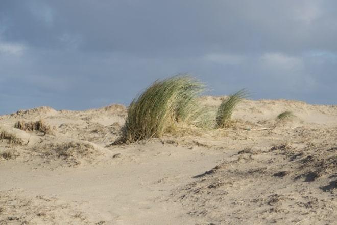 Sand und Grün