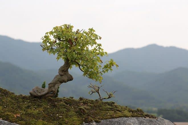 Bonsaiparket von Jan Weiler
