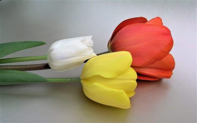 Tulpenmanie und analoge Spiele