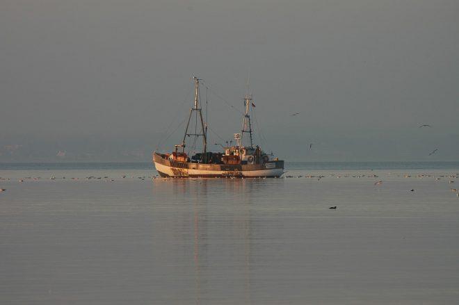 Fischstäbchen werden gefangen
