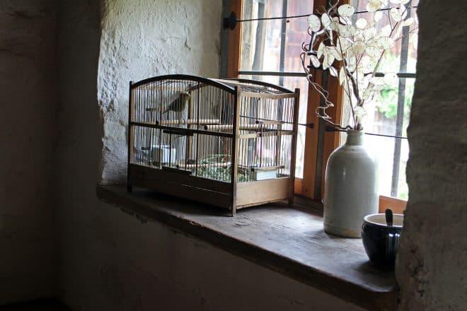 Vogelschiss der AfD