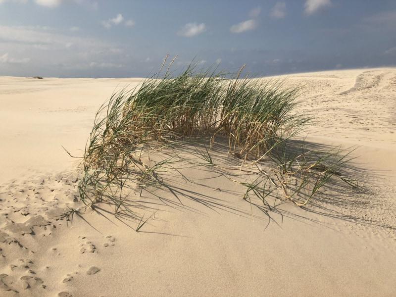 Strandlektüre in den Dünen