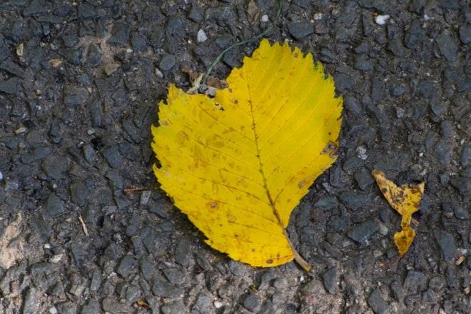 Herbst als Ruhestand