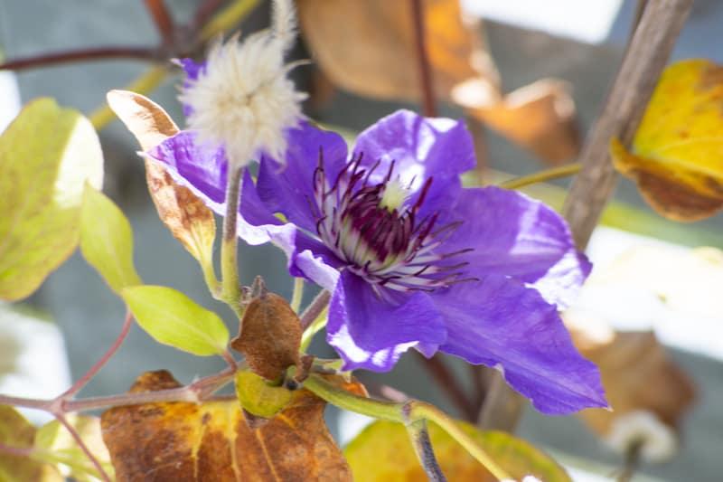 Fremdkörper im Herbst
