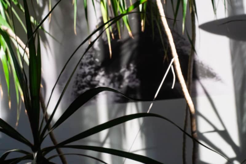 Im Dschungel der Spendenaffäre