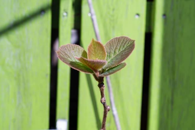 Homöopathie trifft Frühling