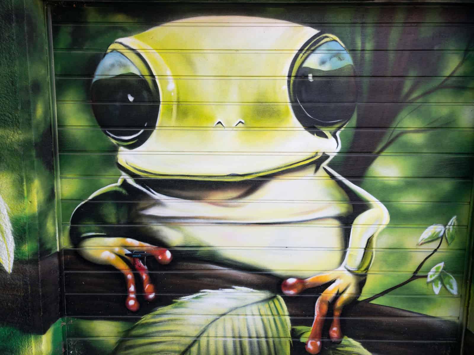 Frosch ohne Einsicht