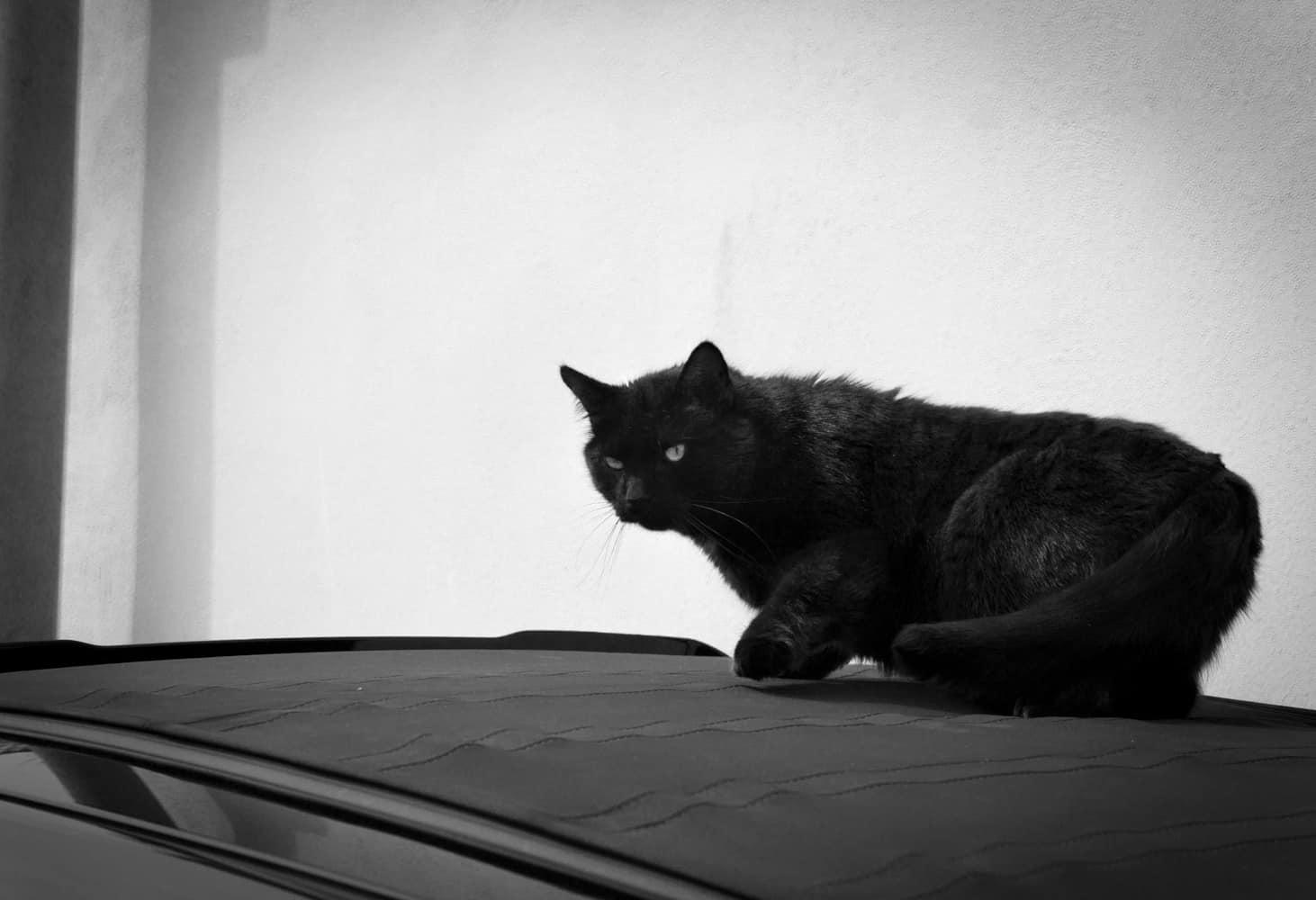 Haltungsfrage bei Katzen