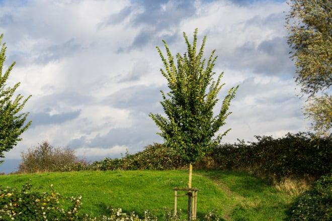Ablasshandel mit neuen Bäumen