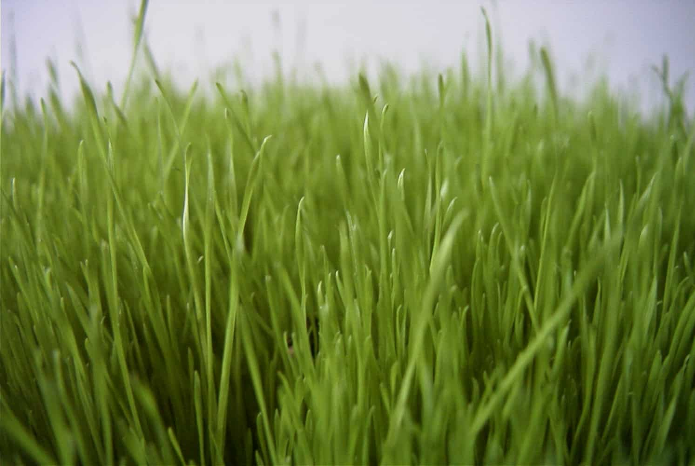 Grün geht immer